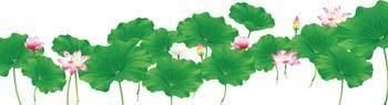free vector Kuvshinka a water Flower 1
