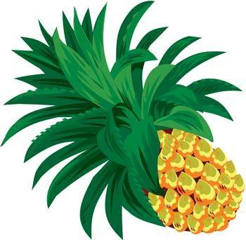 free vector Pineapple 6
