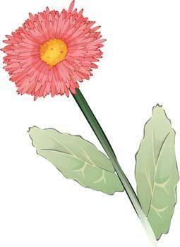 free vector Flo Flower 23