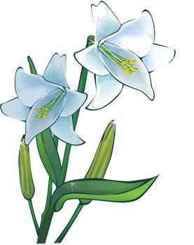 free vector Lili Flower vector 11
