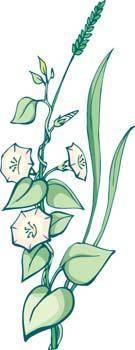 Viun Flower 1