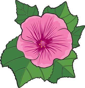 free vector Malva Flower