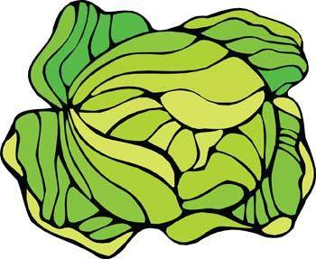 free vector Cauliflower 2