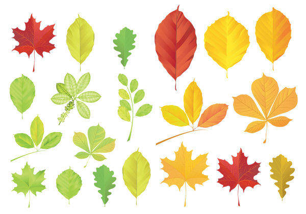 Leaves Vector Leaves Vector