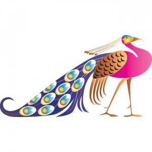 Vector Beautiful Pink Peacock Art Background Beauty
