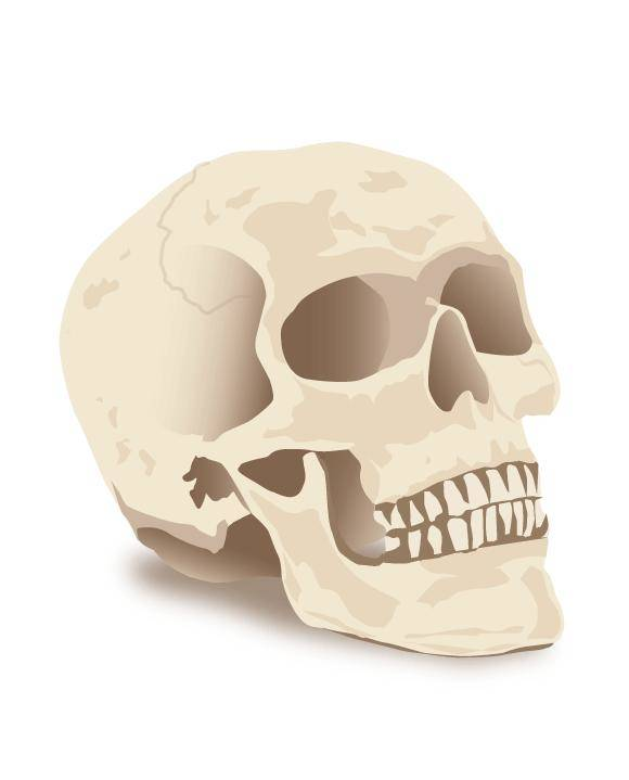 free vector Halloween Skull Vector