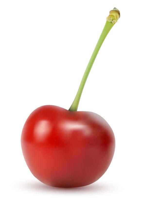 free vector Vector Cherry