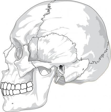 Human Skull Side View clip art