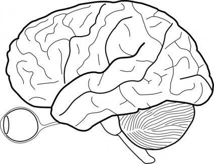 Human Brain Sketch With Eyes And Cerebrellum clip art