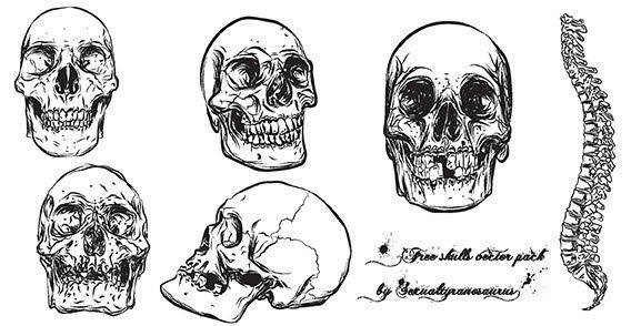 Free human skull with backbone vector pack