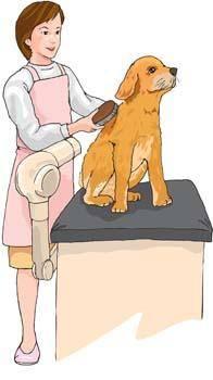 free vector Dog stylist