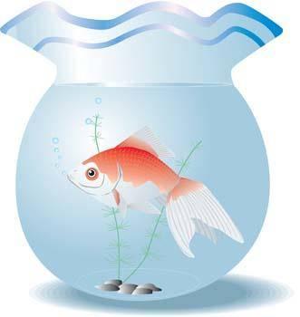 free vector Gold Fish 6