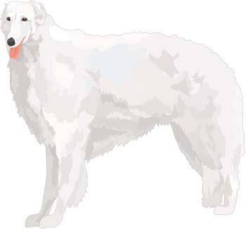 Beautiful Dog Vector 5