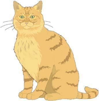 free vector Cat vector 9