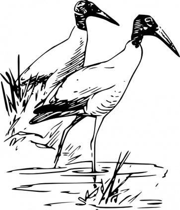 free vector Nayrhcrel Wood Ibis clip art
