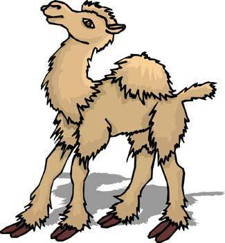 Camel Vector 5