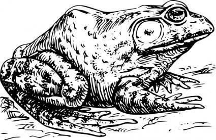 free vector Bullfrog clip art