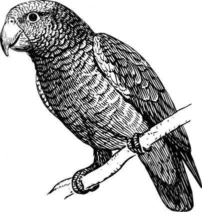 free vector Parrot clip art