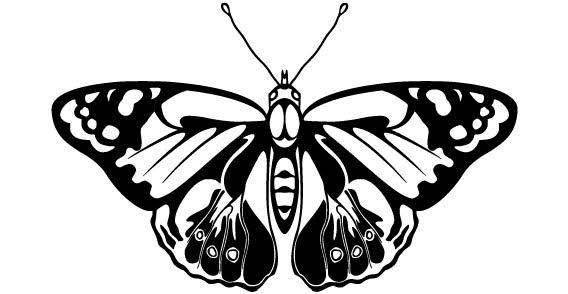 Black and Whine Butterfly vector
