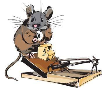 Mouse Vector 6