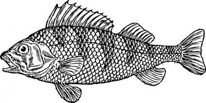 free vector Scaly Fish clip art