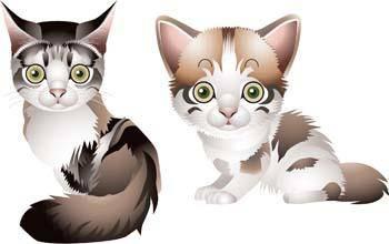 free vector Cat vector 62