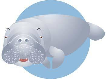 free vector Sea Lion 2