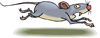 Mice 13