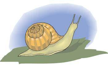 free vector Snail 4