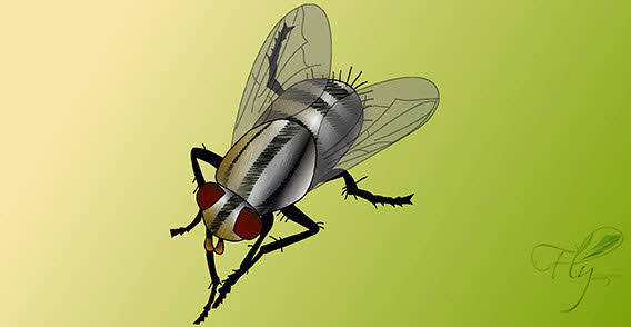 free vector Fly bug insect