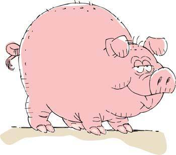 free vector Pig 33