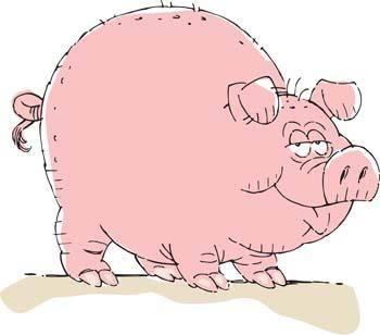 Pig 33