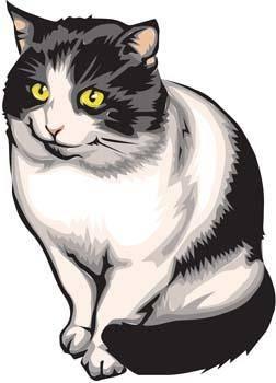 Cat vector 25