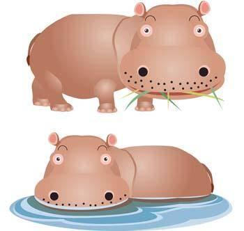 Hippopotamus vector 4