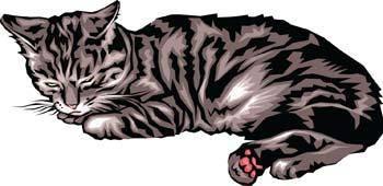 Cat vector 7