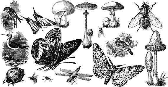 Insects and mushroom free vectors