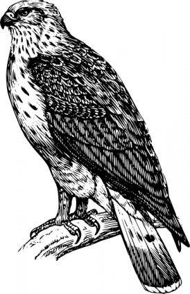 free vector Buzzard Raptor clip art