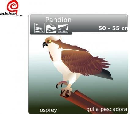 Aguila Pescadora clip art