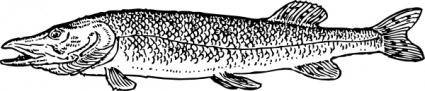 Pike Fish Animal clip art