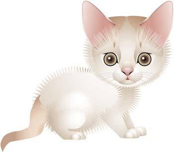 Cat vector 71