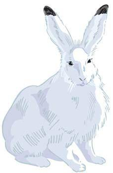 free vector Rabbit 2