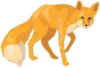 free vector Fox Vector 4