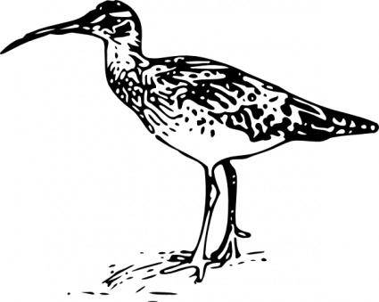 Bristle Thighed Curlew clip art