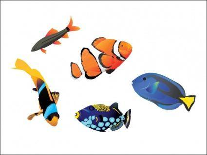 free vector Saltwater Fish