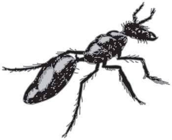 Bee Vector 2