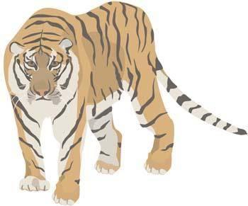 free vector Tiger 5