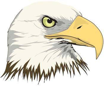 free vector Eagle vector 10