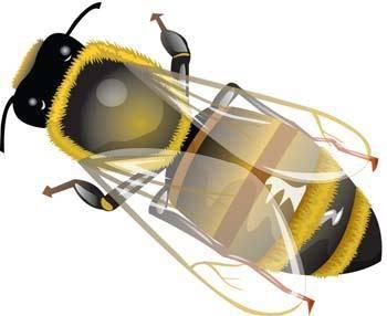 free vector Bee 18