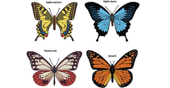 free vector Colorful Butterfly set