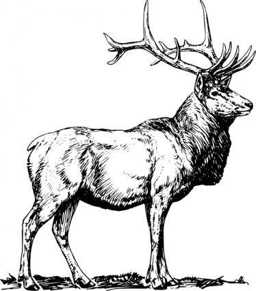 free vector Elk clip art